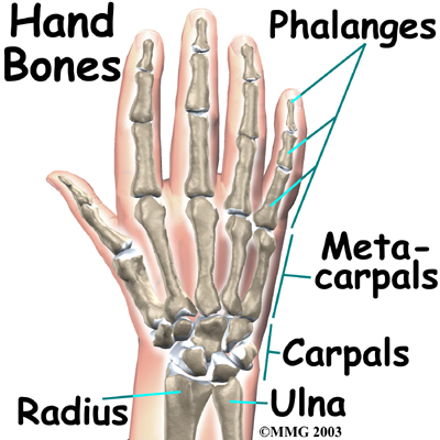el eklemleri - Sağ elimde parmak amputasyonu ve görme sorunumdan dolayı yüzde kaç rapor alabilirim?